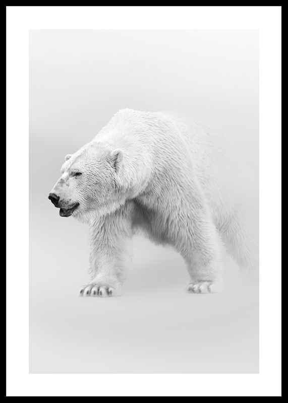 Faded Polar Bear