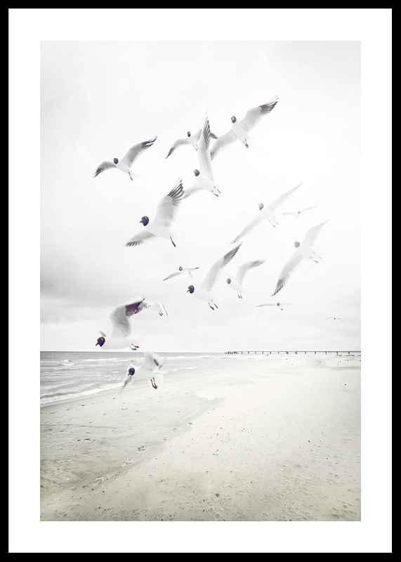 Black-Headed Seagulls