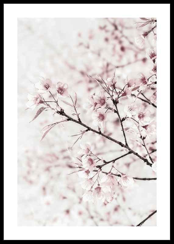 Cherry tree-0