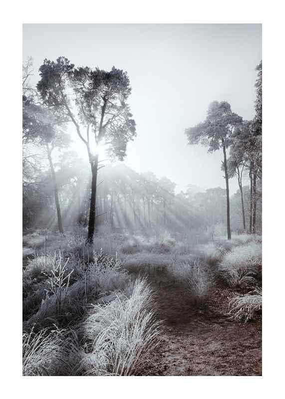 Winter Sunrays-1