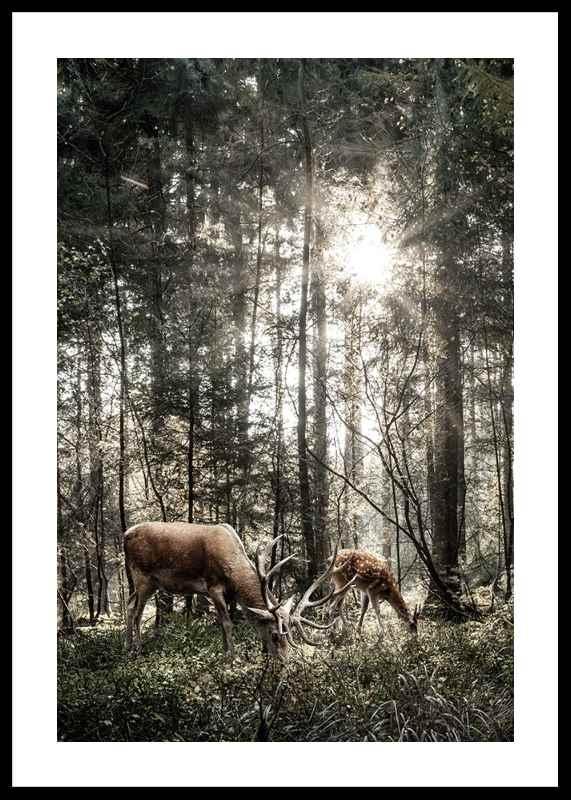 Deer In Sunlight-0