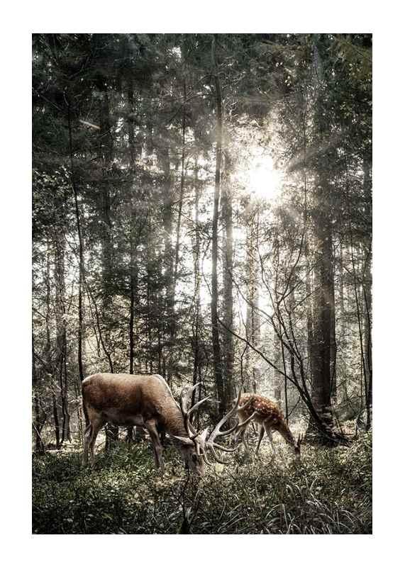 Deer In Sunlight-1