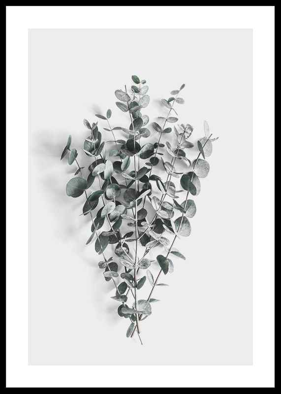 Eucalyptus No5-0