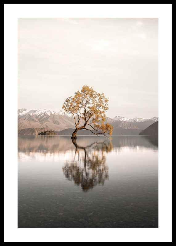 The Lonely Tree-0