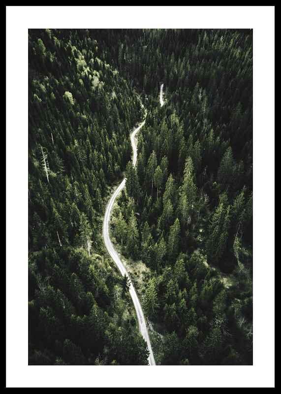 Coniferous Forest-0