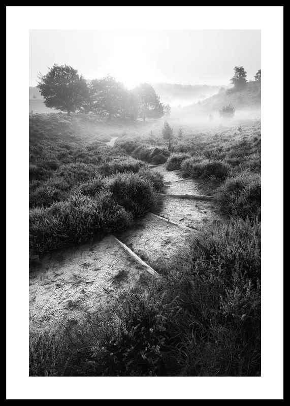 Foggy Road-0