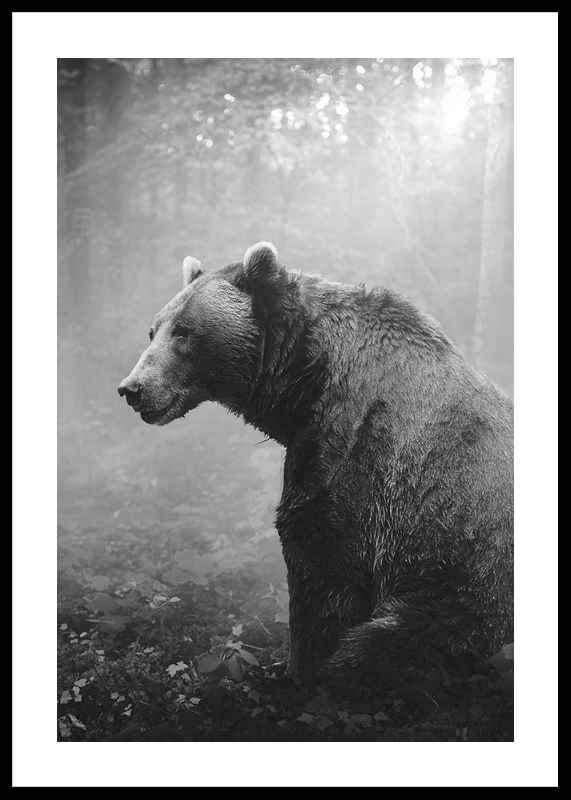 Grizzly Bear-0