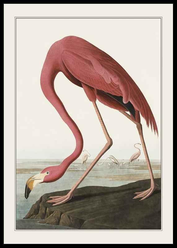 Flamingo 1827