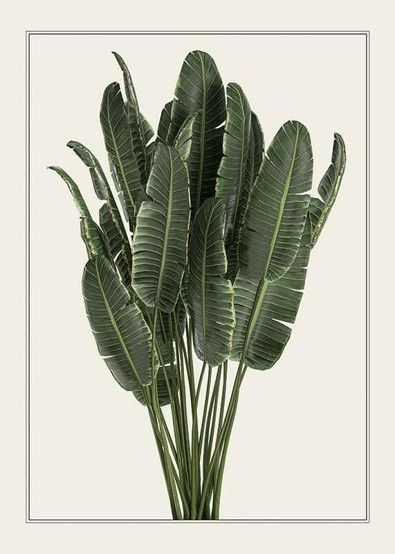 Banana Plant-1
