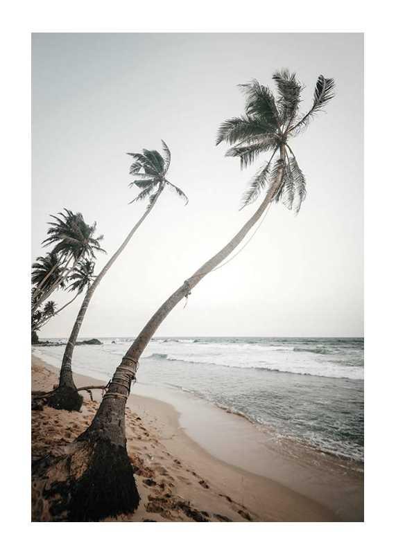 Beach Palm Trees-1