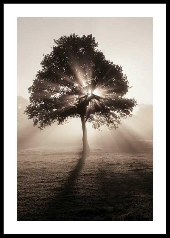 Tree In Sunrise-0