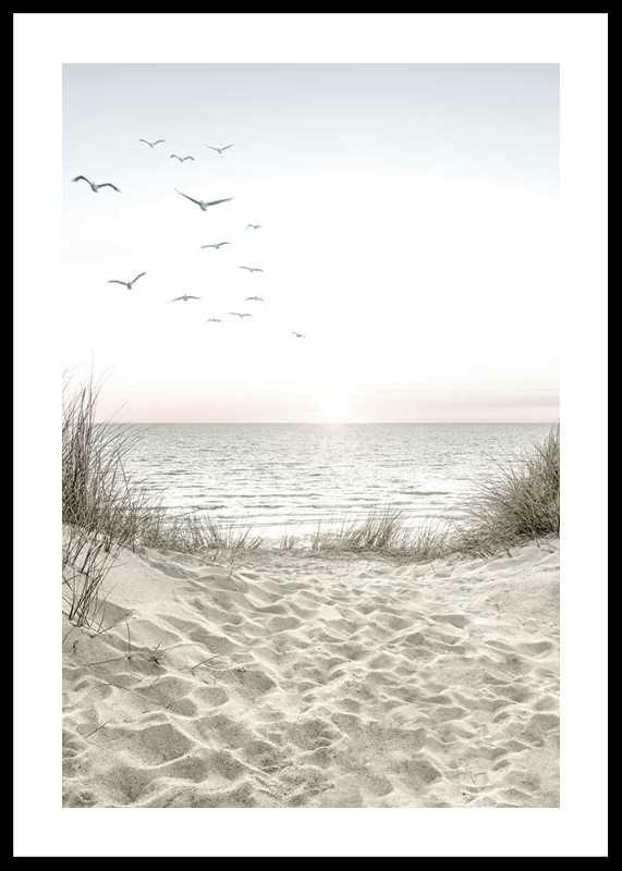 Seagulls Sandy Beach