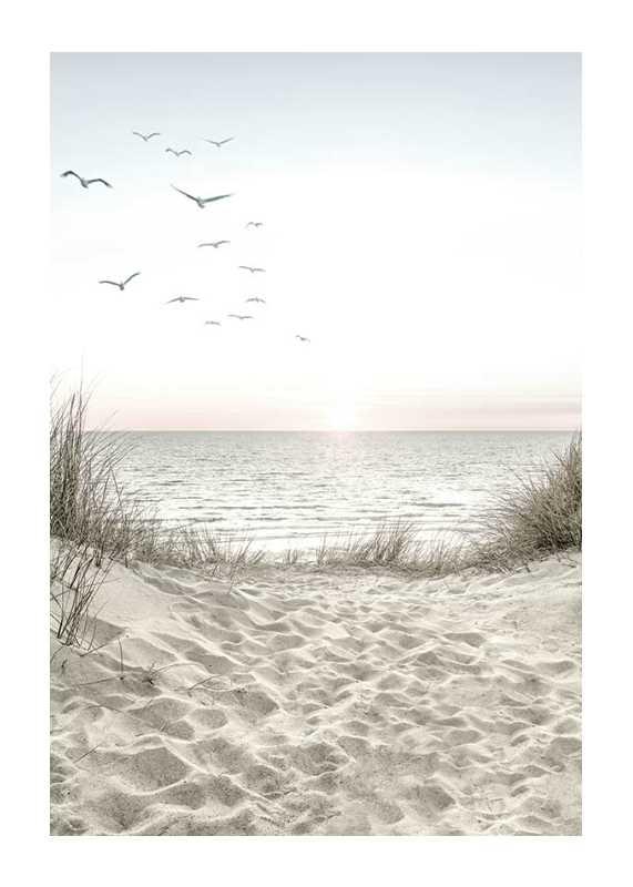 Seagulls Sandy Beach-1