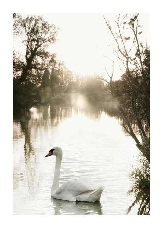 White Swan-1
