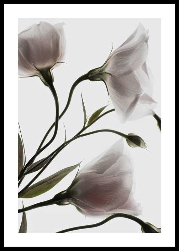 Three White Flowers-0