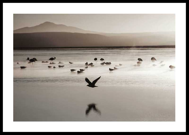 Birds In Nature-0
