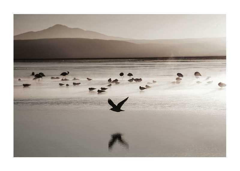 Birds In Nature-1