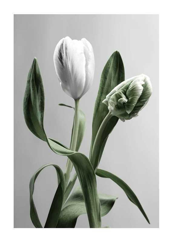 Tulip Flower-1