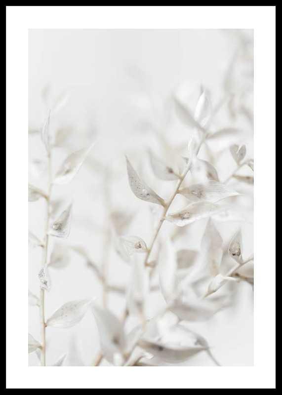White Dried Flower-0