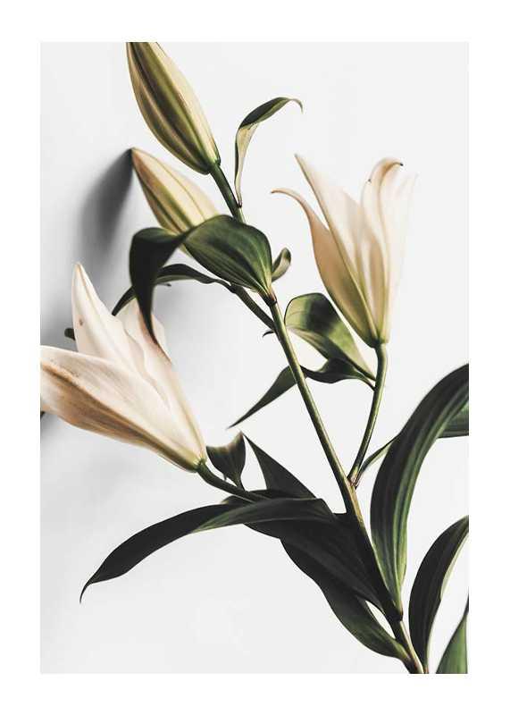 Lilies-1