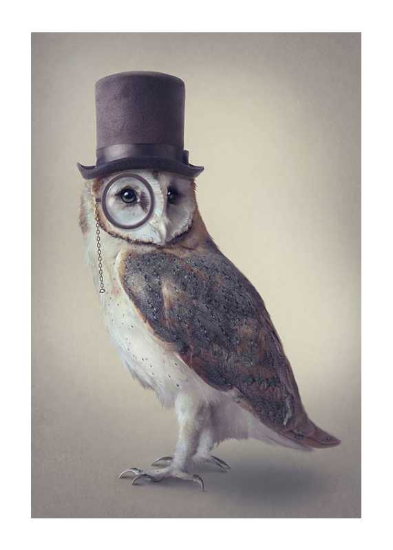 Potter Owl-1