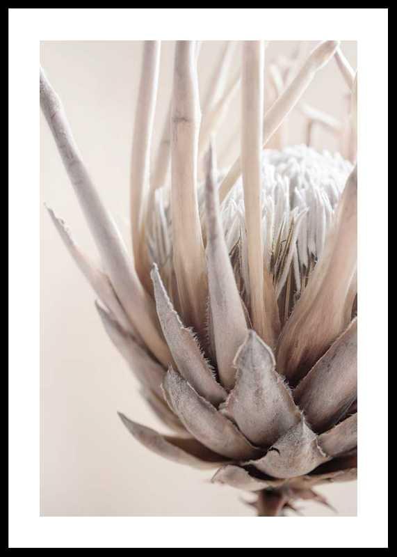 Protea Flower No2-0