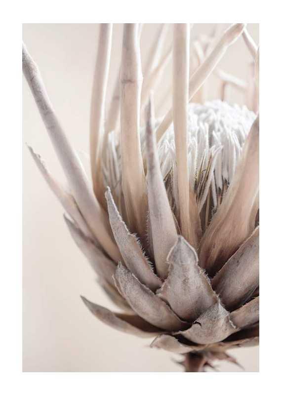 Protea Flower No2-1
